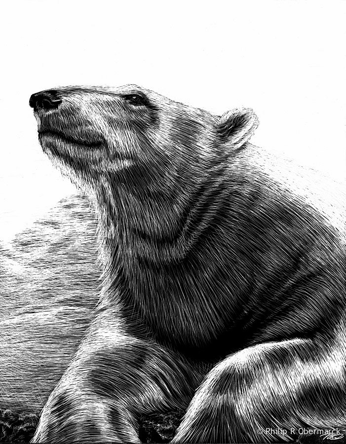 Polar Bearl  -  SOLD